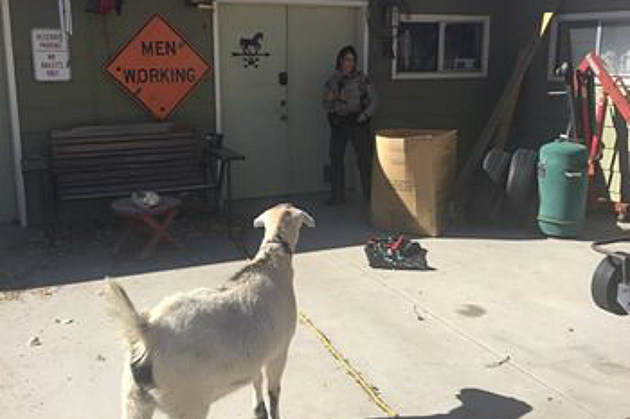 Goat Mesa County Sheriff