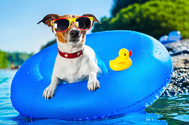 Your Dog Deserves an End-of-Summer Swim at Lincoln Park