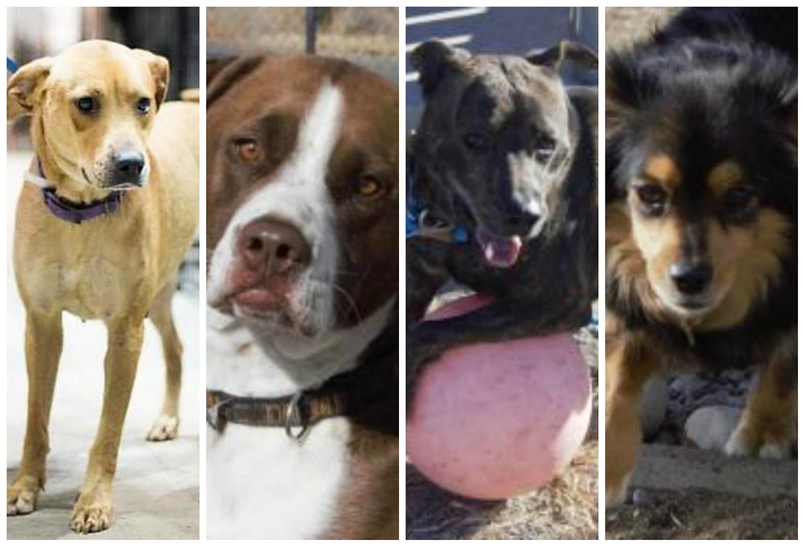 Grand Junction Roice Hurst Humane Society